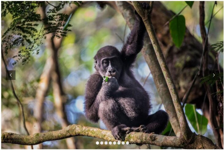 CONGO - AN ADVENTURE IN THE HEART OF AFRICA
