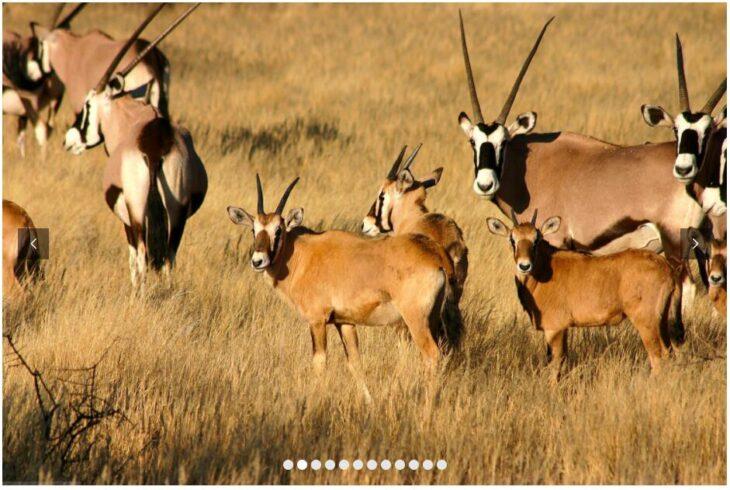 NAMIBIA - DUNES, SAFARIS AND CHARMING CITIES 2