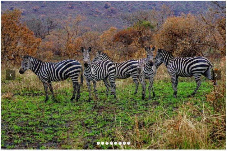 RWANDA - THE LAND OF A THOUSAND HILLS 2