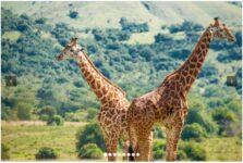 RWANDA - THE LAND OF A THOUSAND HILLS
