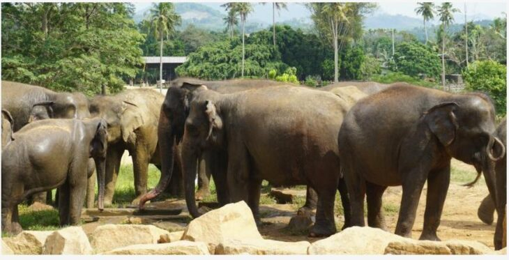 Travel story from Sri Lanka